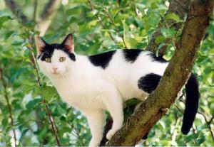 chat-noir-et-blanc-2